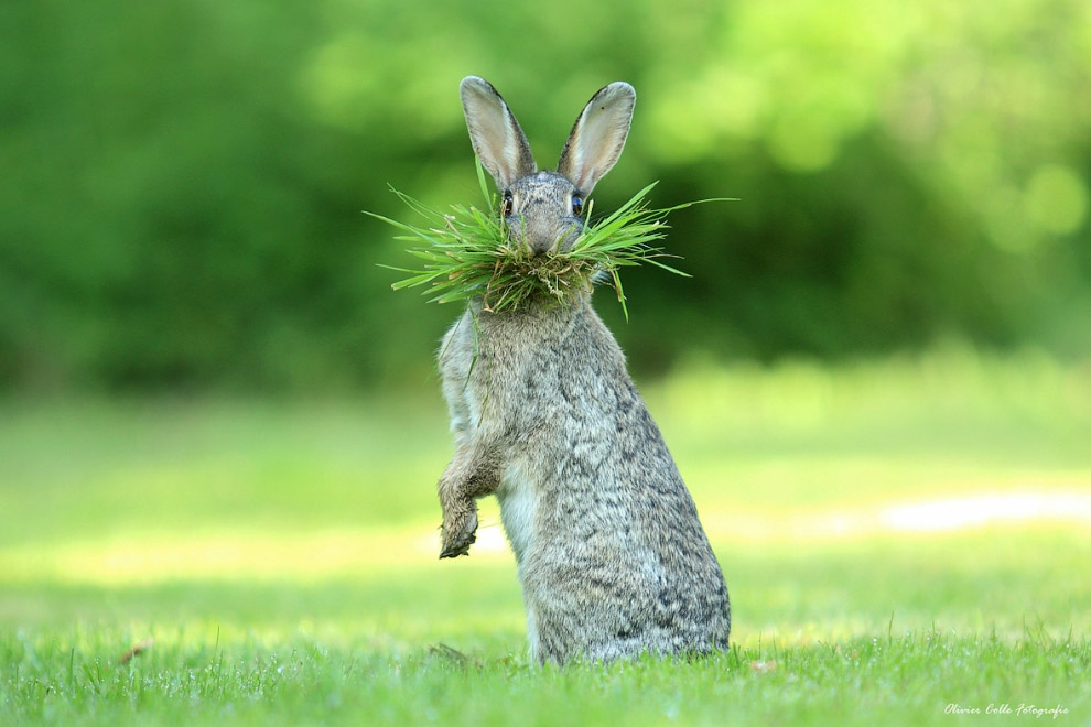 19. Перебрал. (Фото Johnny Ka?a?pa | The Comedy Wildlife Photography Awards):