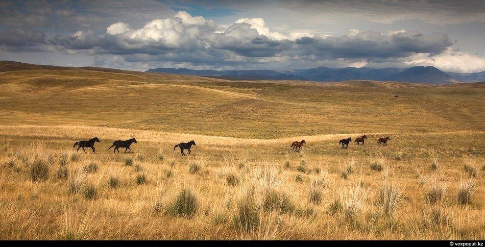 Дополняют придорожный ландшафт грациозные лошади, бескрайние поля и, конечно же, высоковольтные лини
