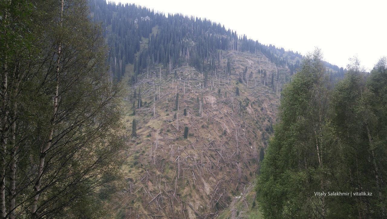 Поваленные деревья на той стороне от тропы.