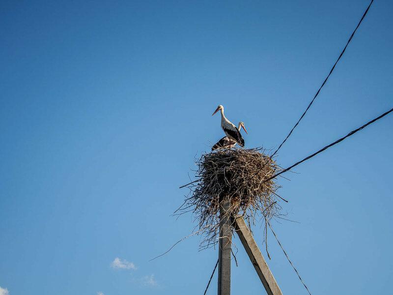 Кревские птицы.
