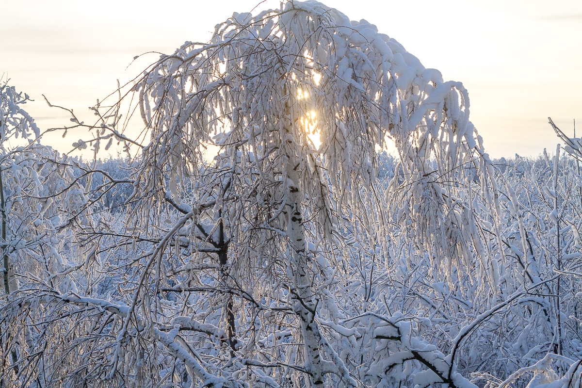 зима иней фото 3