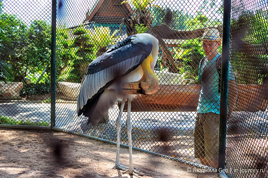 птица в зоопарке в парке древних камней