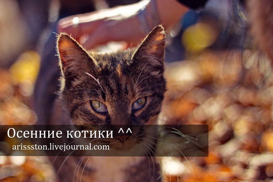 Осенние котики