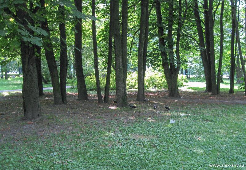 Московский парк Победы. В парке много птиц, в основном городских - голубей, ворон, воробьёв.