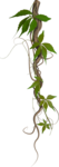 Carena-In the Forest 86.png