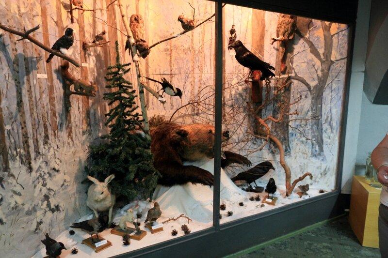 Городецкий краеведческий музей, животный мир