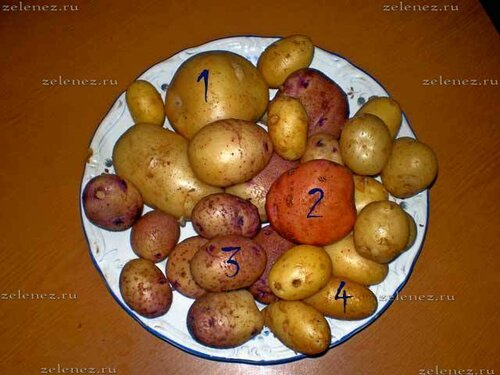 Образцы картофеля середины июля 2013