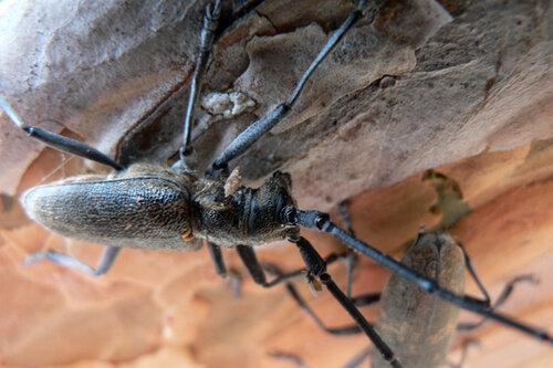 из жизни жуков тусовка