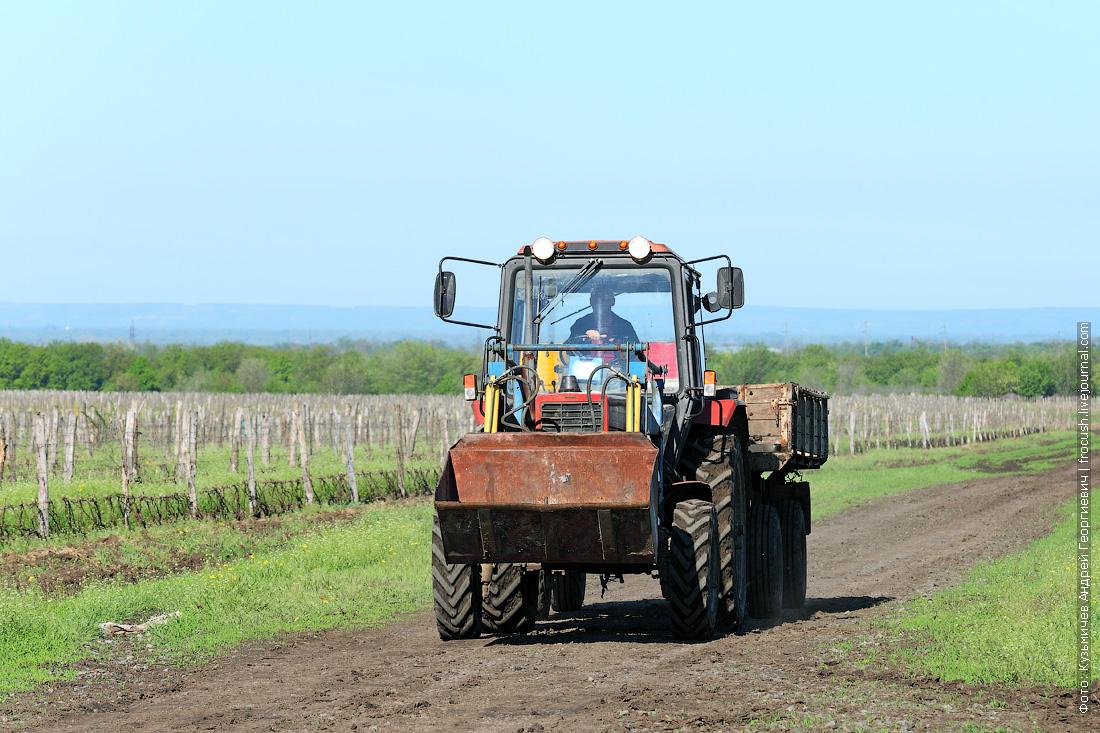 трактор на поле, где произрастает виноградная лоза
