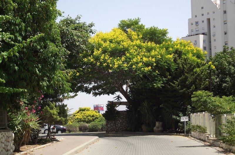Как сфотографировать деревья уходящие в небо нравится