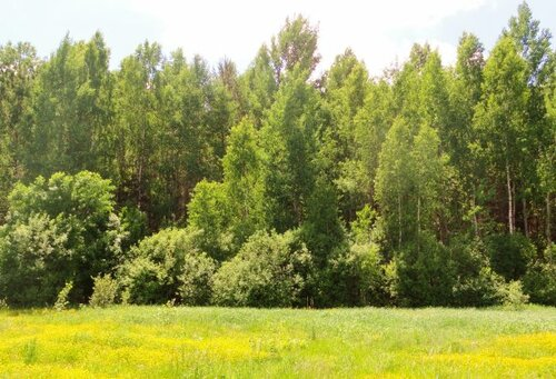 Сохраним жизнь деревьям