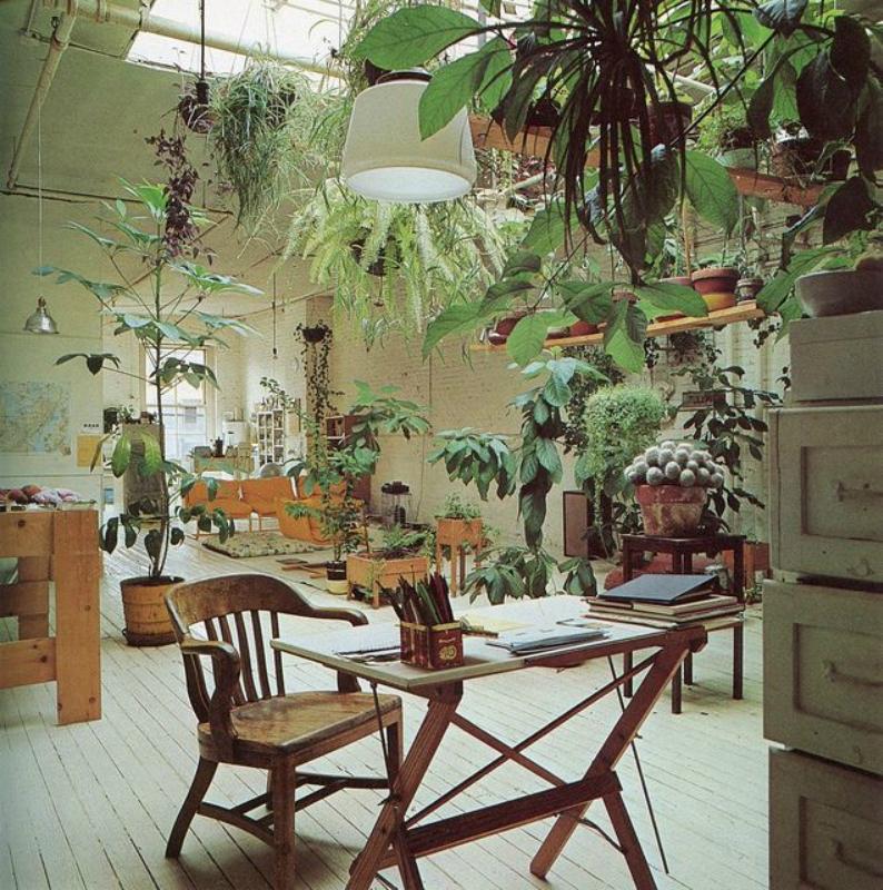 Комнатные растения, нетребовательные к поливу