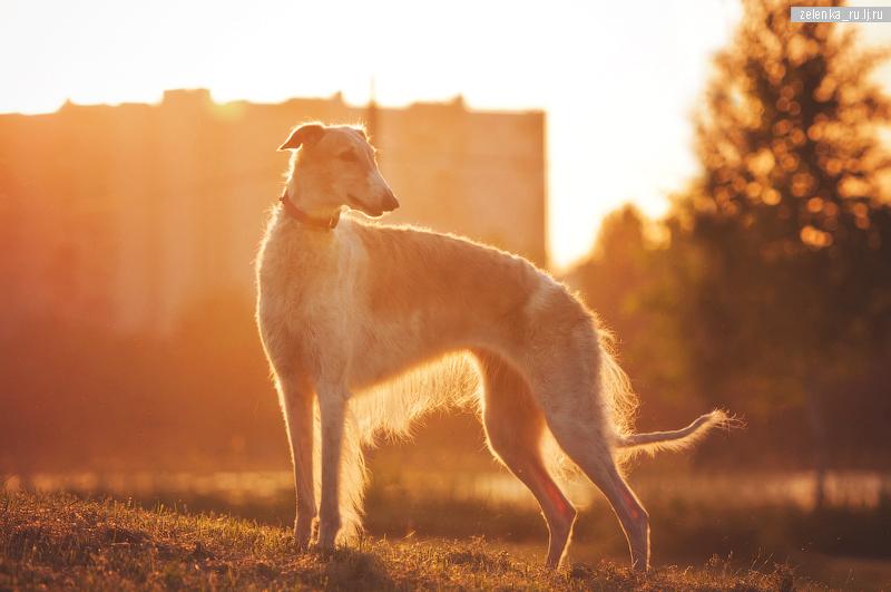 пофотографирую Ваших собак! 0_15f335_8bb19f44_orig