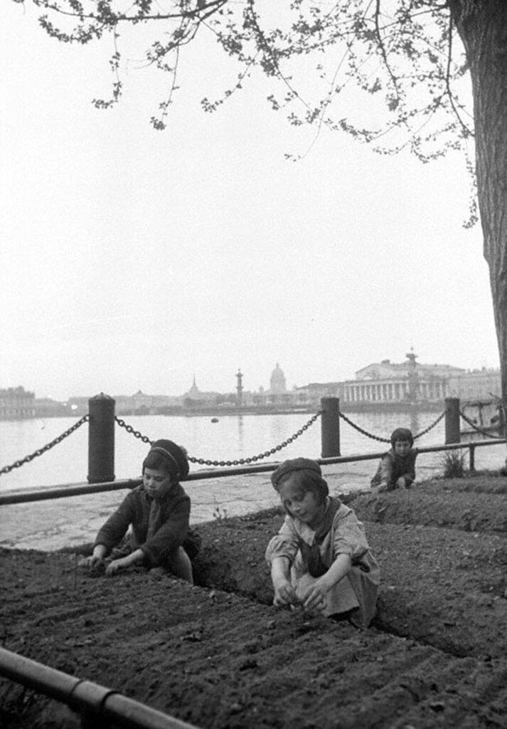Дети у грядок на набережной в Ленинграде. 1942 г.