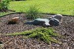 Juniperus horizontalis Golden Carpet, Thuja occidentalis Filiformis