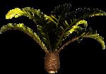 Palms  (16).png