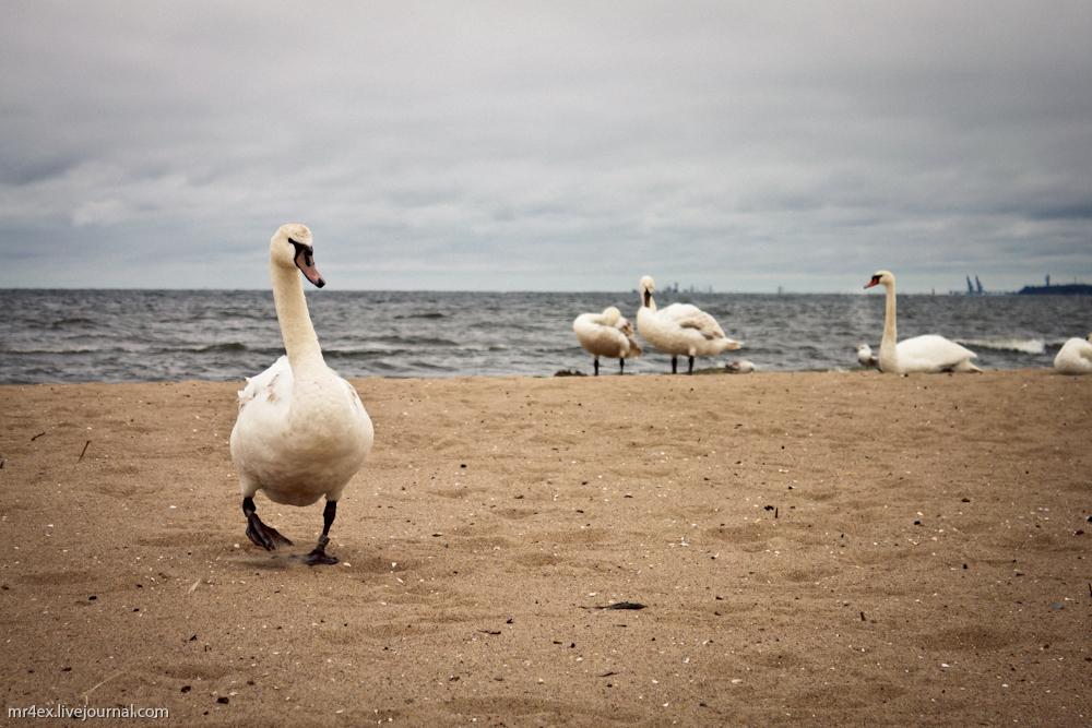 Польша, Сопот, Польская Балтика, Пляж в Сопоте