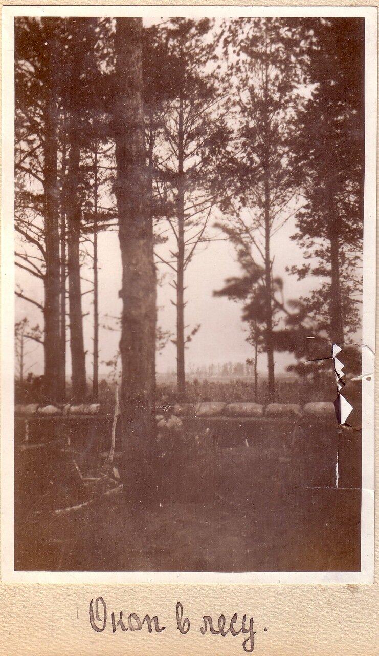 Окоп в лесу
