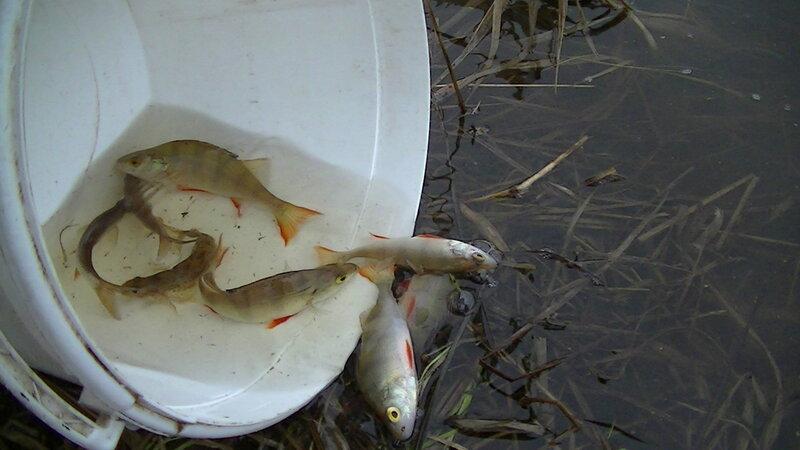 талицы рыбалка форум
