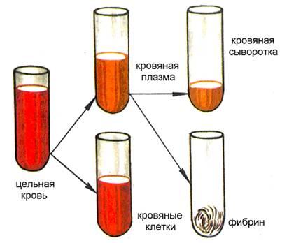 Анализ крови приделы нормы
