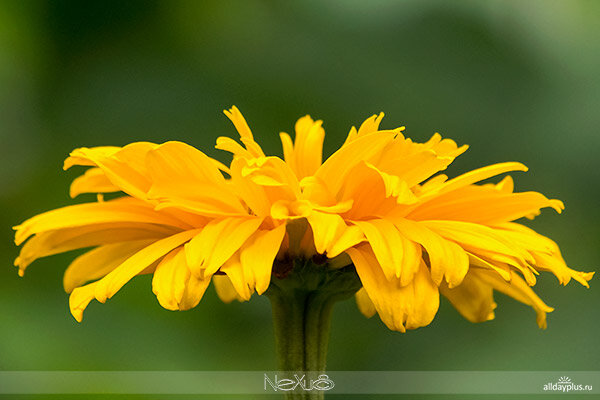 Я люблю все цветы, часть 54.