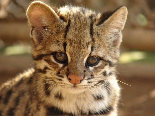 Тысячи кошек спасены в горах Китая