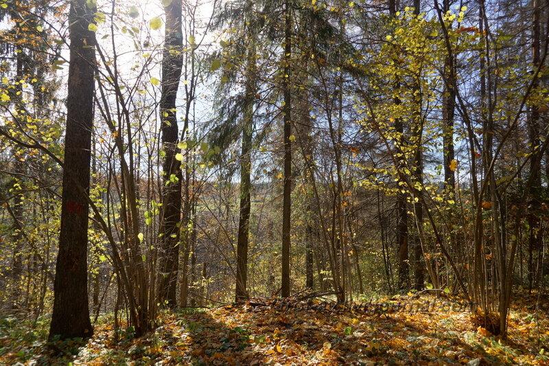 Лес вокруг усадьбы, Усадьба Любвино, Тучково