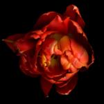 12206401748_fleurs.png