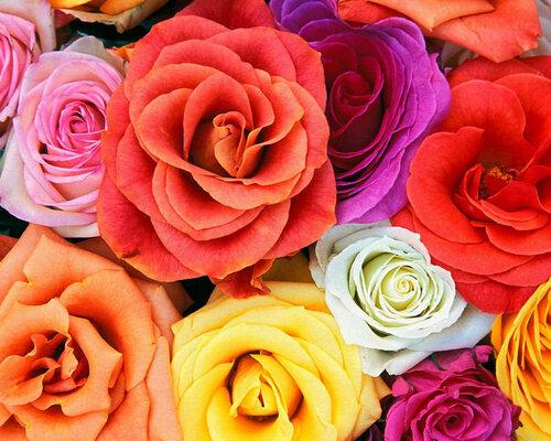 Разноцветные розы на радость открытка поздравление картинка