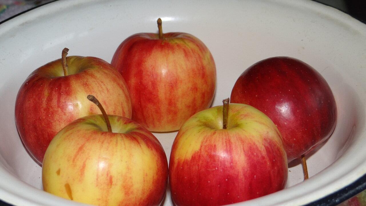 натюрморт. яблоки.