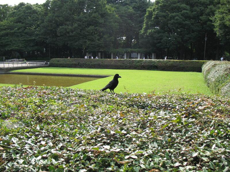 Птица в парке Уэно в Токио