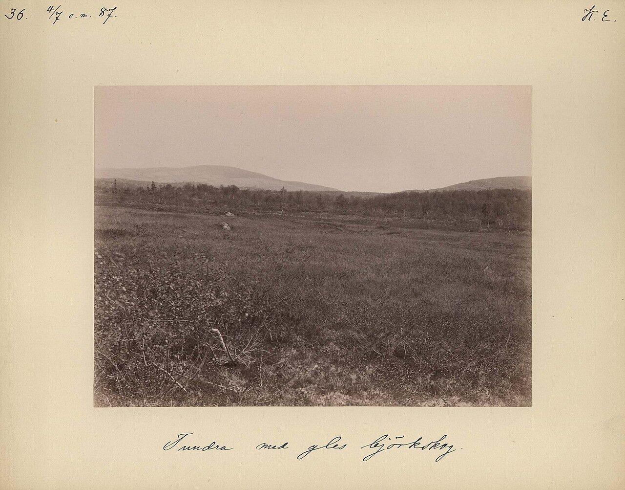 4.7.1887. Разреженный тундрой березовый лес  в послеобеденное время