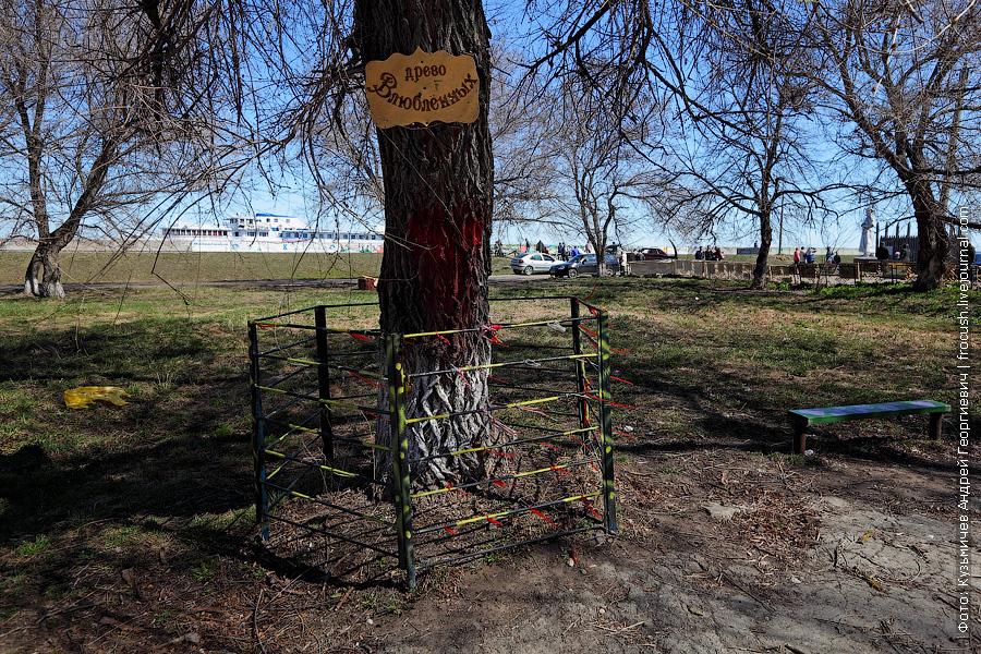 «Дерево влюбленных» в парке культуры и отдыха Козьмодемьянска