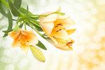 Spring Flowers #4 (5).jpg