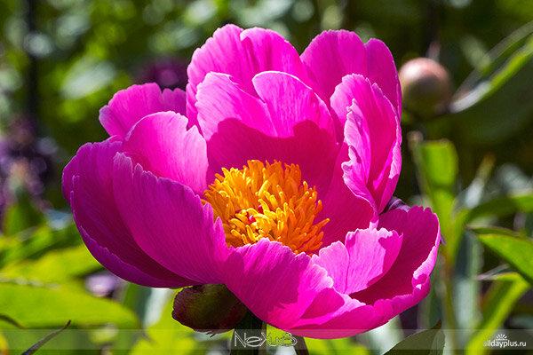 Я люблю все цветы, часть 50.