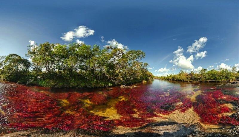 Цветная река (Колумбия)
