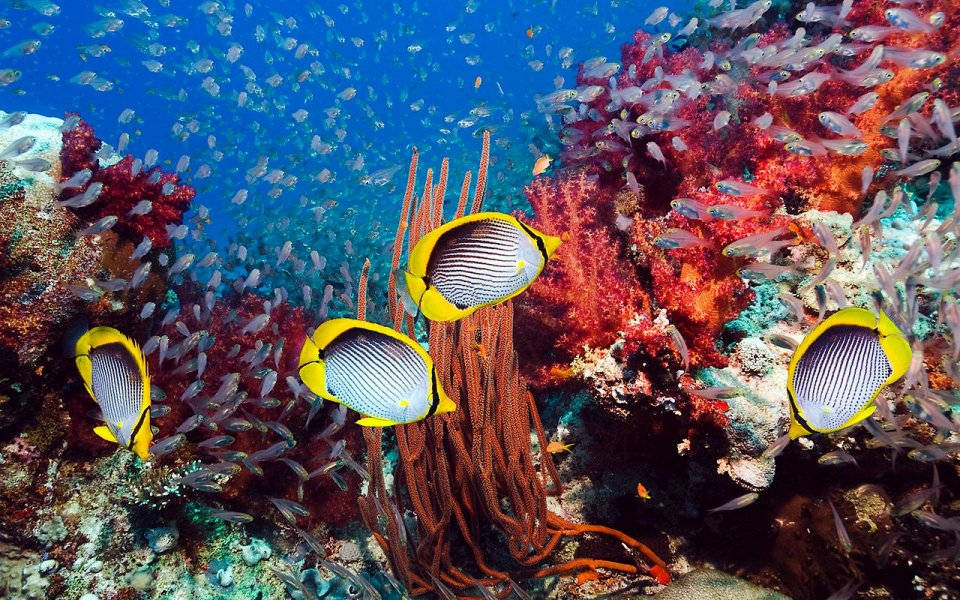 Дырки в кораллах живут рыбки
