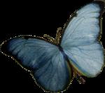 Blue_Morpho_Butterfly_ATC.png