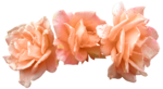 Butterfly Bouquet (38).png
