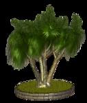 Palms  (8).png