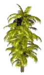 Palms  (44).png