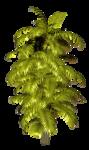 Palms  (44).png