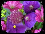 TalaNat_Flowers-05-09-2013.png