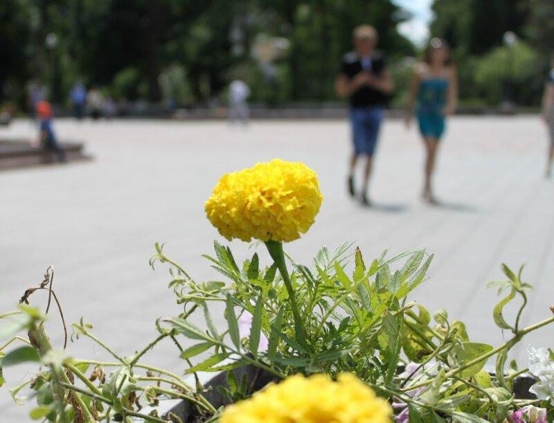 Цветы в Мариинском парке