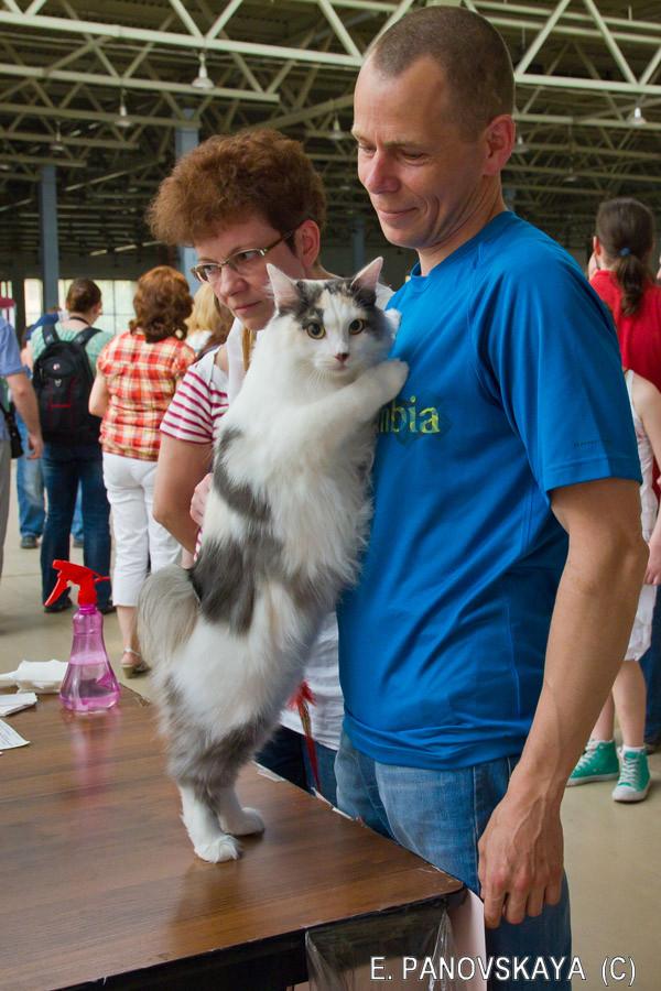 шоу лесных кошек