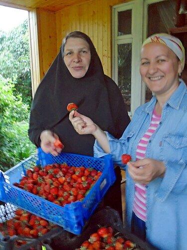 Лето 2013, первый урожай