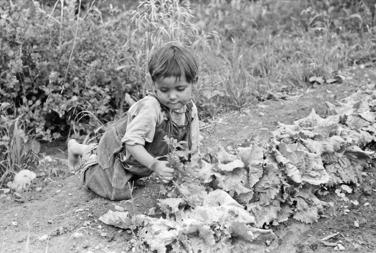 Мальчик из семьи испаноязычных американцев пропалывает сад, Чамисал, Нью-Мексико, 1940