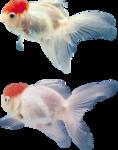 рыба (9).png
