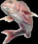 рыба (65).png