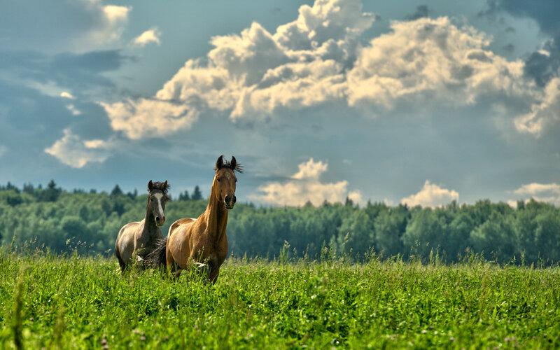 Табун коней в стремительном